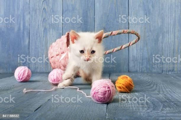 White kitten at blue wood picture id841188532?b=1&k=6&m=841188532&s=612x612&h=v4soow7mvqgvy5fmypbboqbk sn2v7ufz5npqsgtcdq=