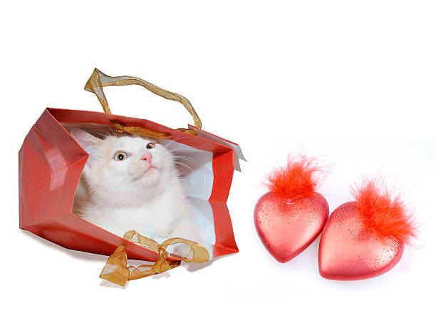 White kitten in red package and two red hearts White kitten in red package and two red hearts kitten cute valentines day domestic cat stock pictures, royalty-free photos & images
