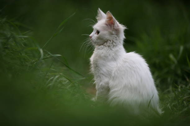 White kitten on green blurred background stock photo