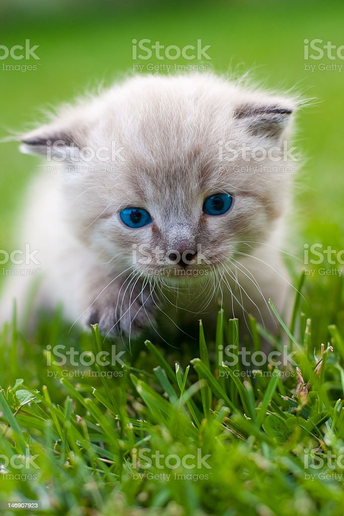 White kitten on the grass. royalty-free stock photo