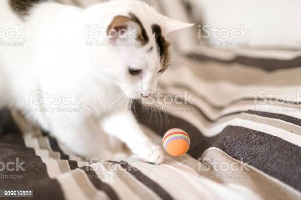 White kitten playing with its orange ball picture id939616522?b=1&k=6&m=939616522&s=612x612&h=ga0ca60kyeip o5jb4qqjo7tqvlyq2mb amgduybaws=