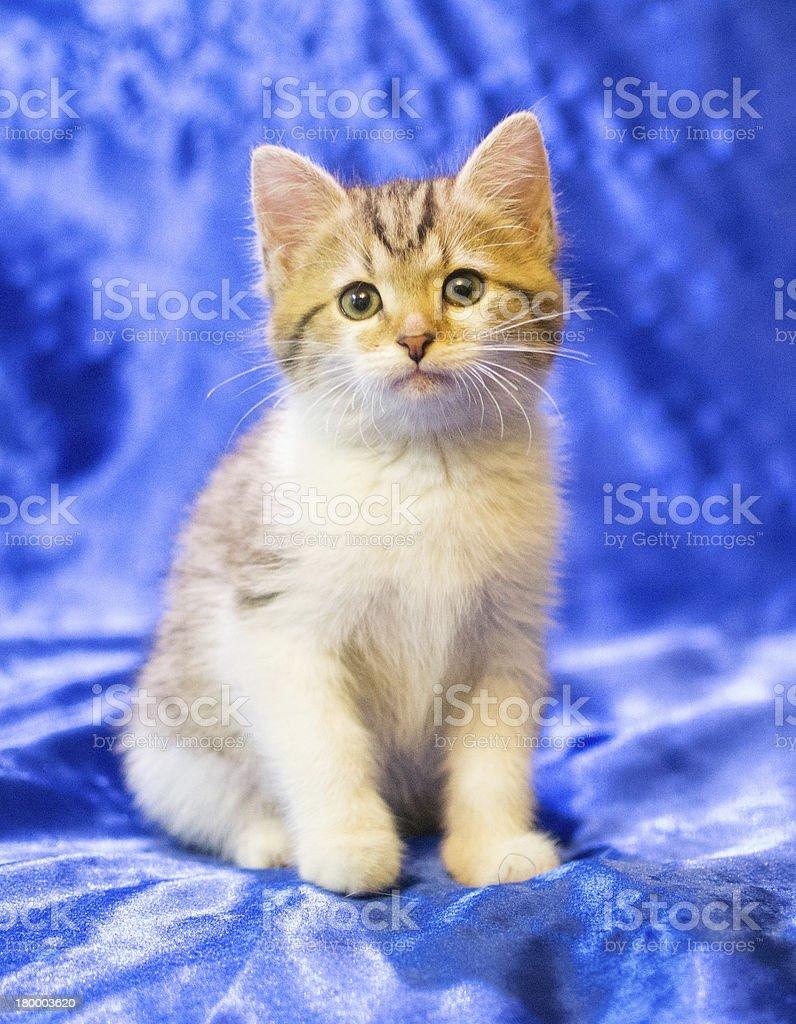 인명별 고양이 새끼 회색 명소 및 스트라이프 royalty-free 스톡 사진