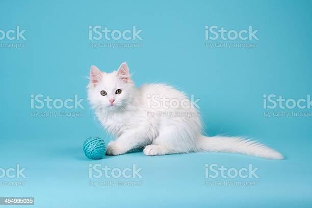 White kitten with yarn picture id454995035?b=1&k=6&m=454995035&s=612x612&h=oatjzkdc vxbvba pgmcokyc523k5rz02frkrgdseva=