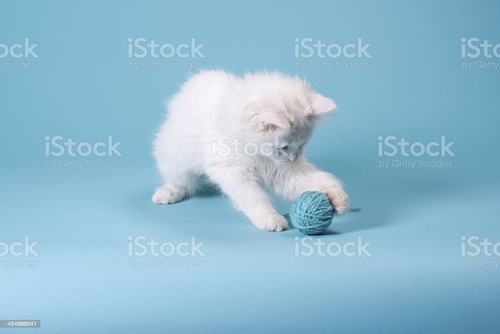 White Kitten With Yarn