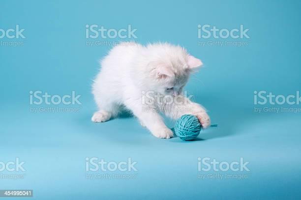 White kitten with yarn picture id454995041?b=1&k=6&m=454995041&s=612x612&h=ozvrqf5yd4pthxd7j2sreya1s7mqyzmdmxso1twozrq=
