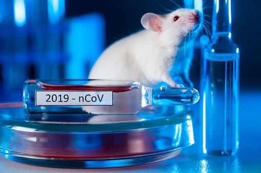 A white laboratory mouse next to the coronavirus vaccine ampoules. Concept - COVID-19 pandemic, vaccine development