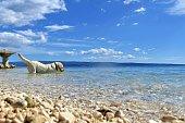 Portrait of a happy dog/ White Labrador retriever enjoying in the sea