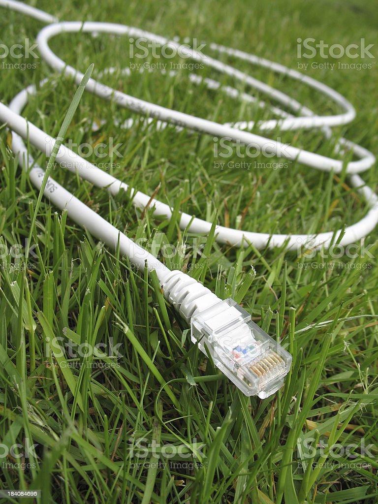 White LAN cable stock photo