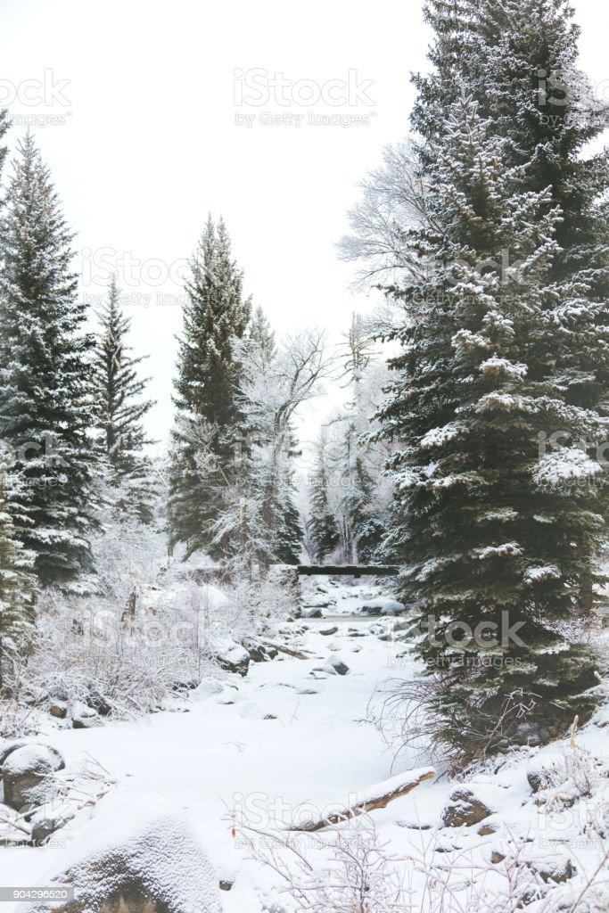 White Landscapes - High Altitude Western Colorado Winter Snowfall stock photo