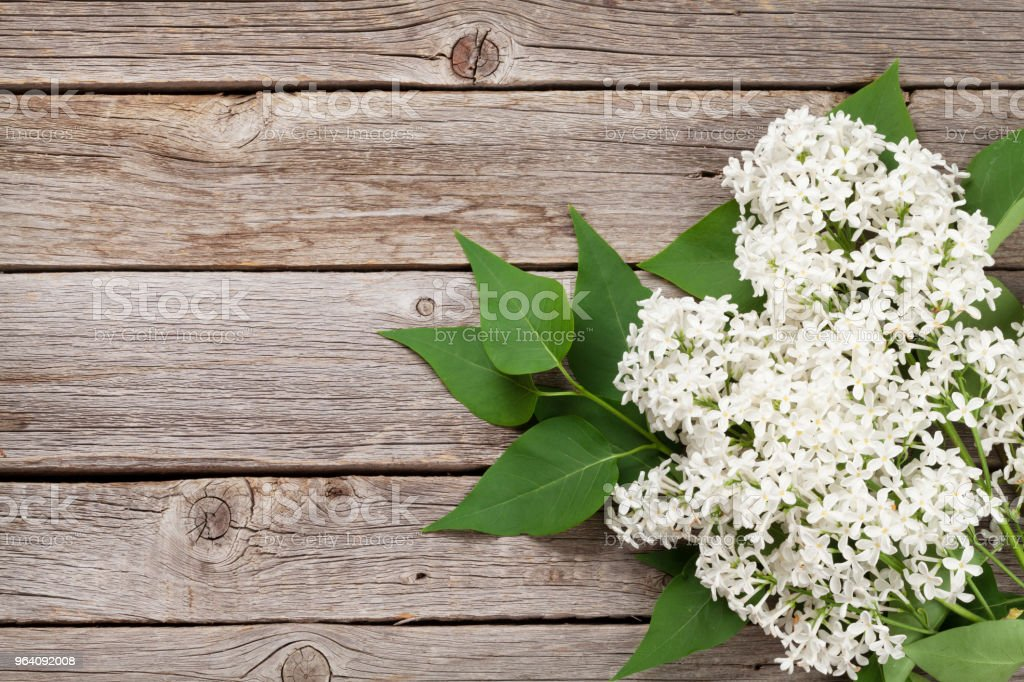 White lilac flowers - Royalty-free Above Stock Photo