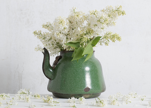 white lilac in old teapot on white background