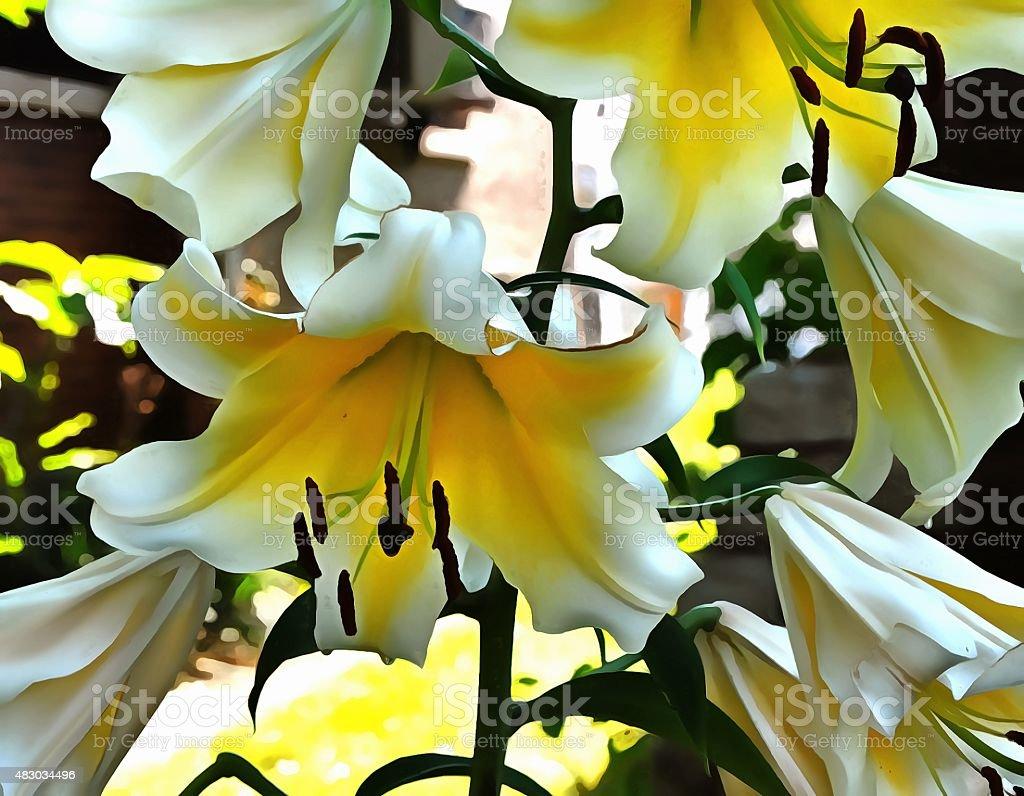 White Lilly 105 stock photo