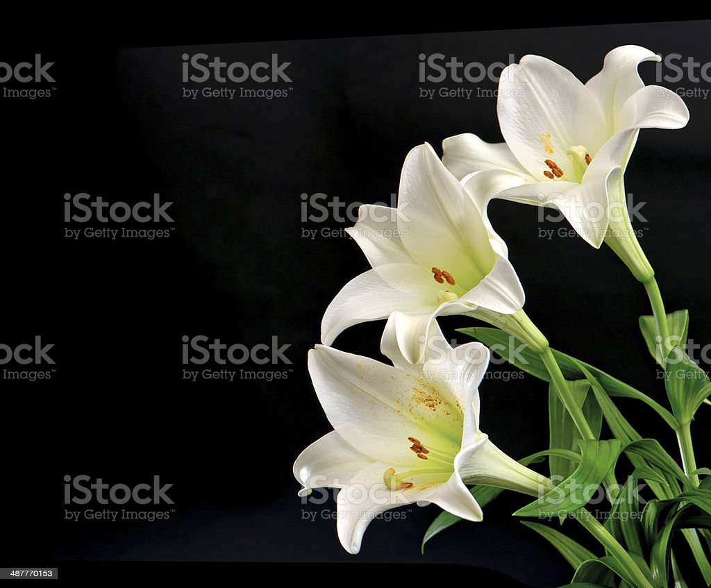 White Lily Flowers Bouquet On Black Stock Photo More Pictures Of