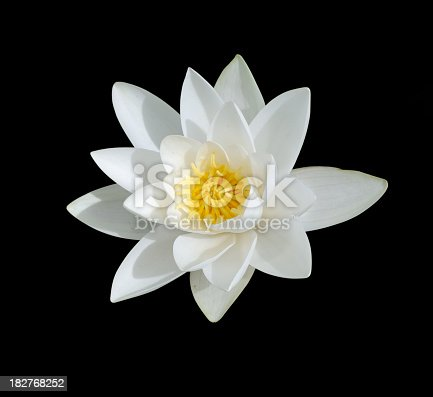 Water Lily,Isolated On Black