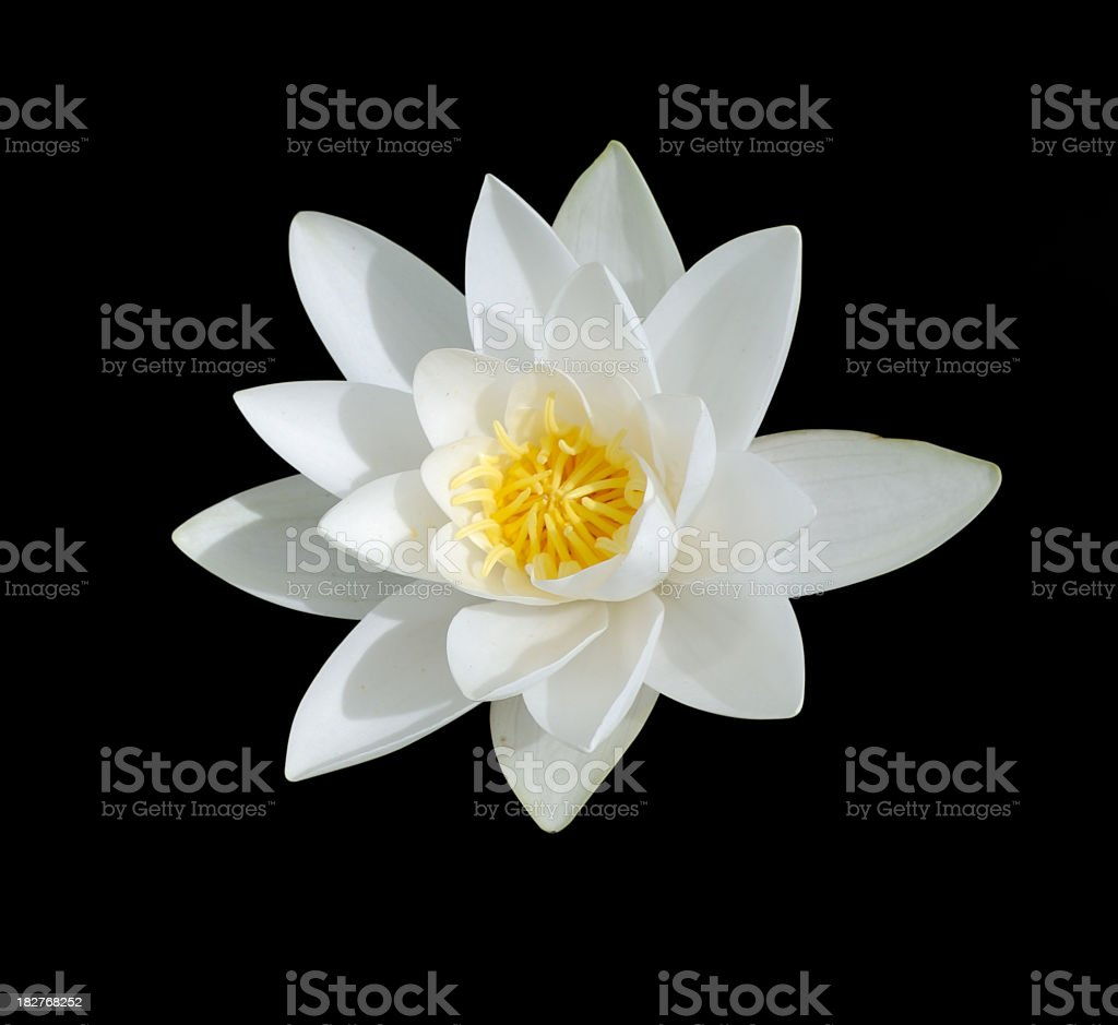 White Lily with yellow center isolated on black stock photo