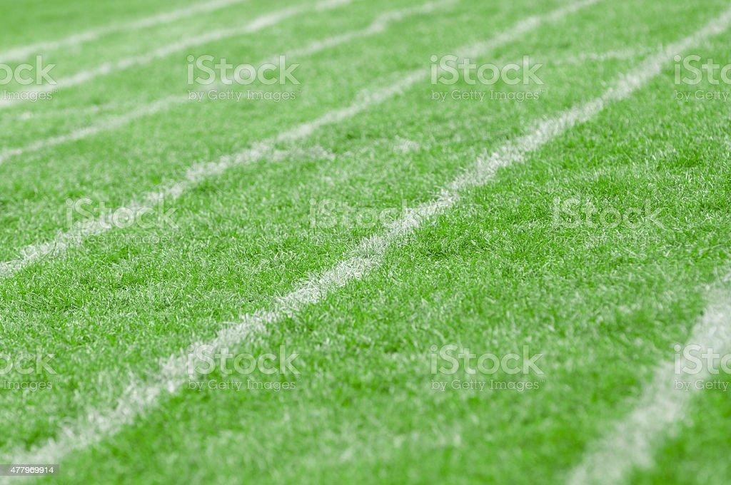 White Line on Lawn stock photo