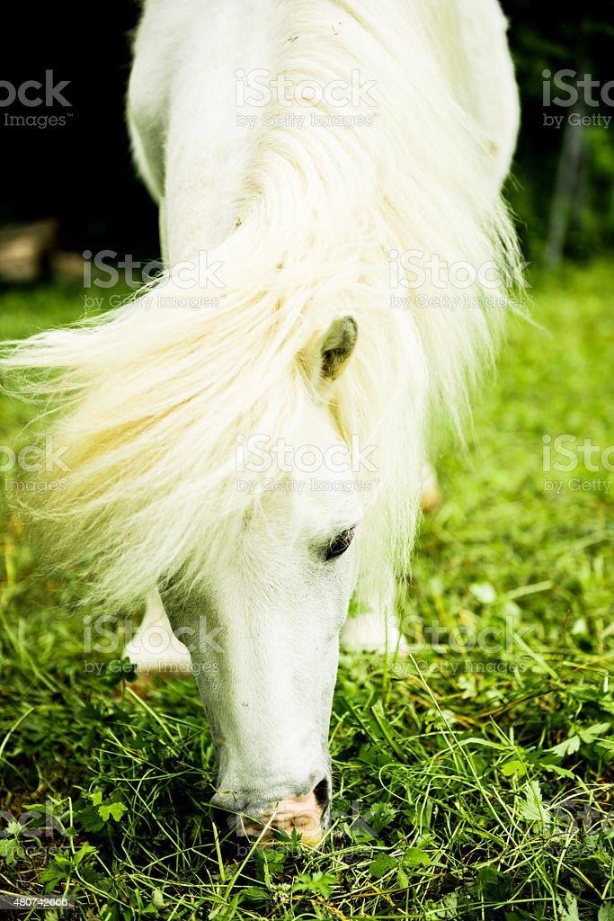 White little pony stock photo