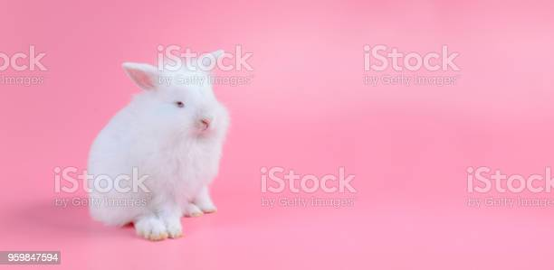 White little rabbit on pink background with copy space for text picture id959847594?b=1&k=6&m=959847594&s=612x612&h=bqejyu2madspw4pfcj 7i6imi6syfb14gg7wi8cf1lq=