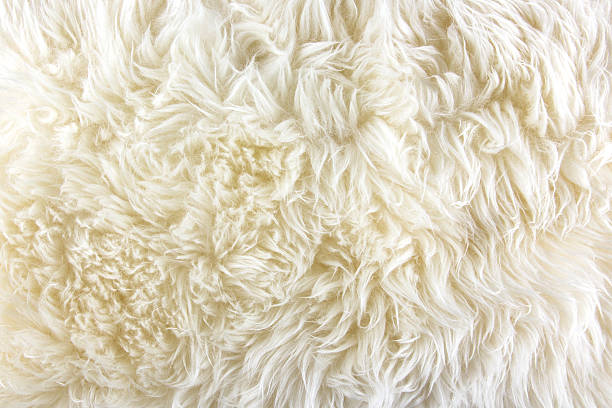White long hair fur background stock photo