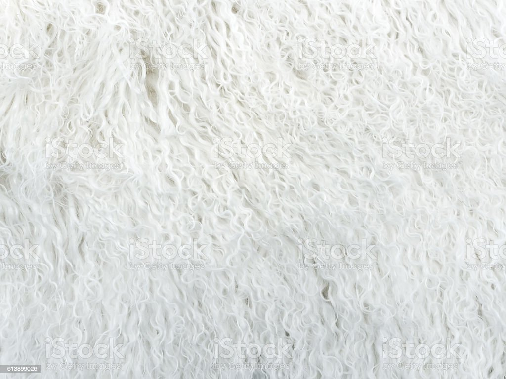white long hair fur for background or texture stock photo