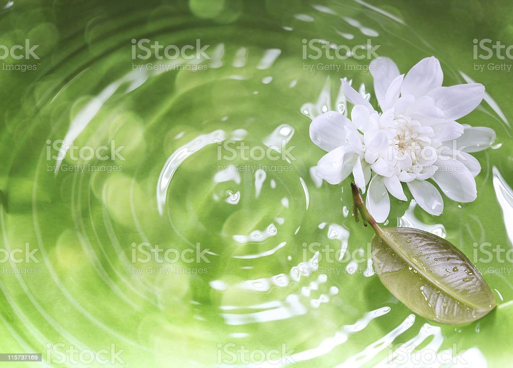 White lotus and leaf on rippling green background royalty-free stock photo