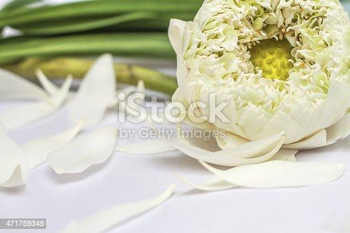 White lotus flower background