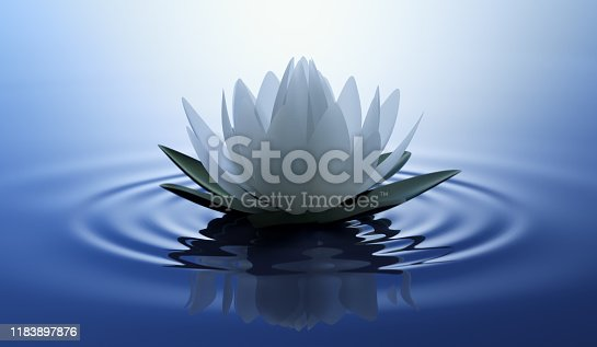 White lotus flower or waterlily in dark blue sea