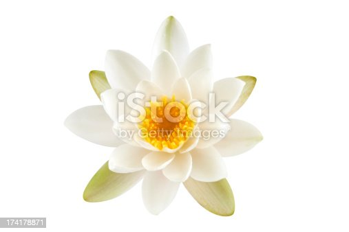 White Lotus flower isolated on white background. Clipping path included.