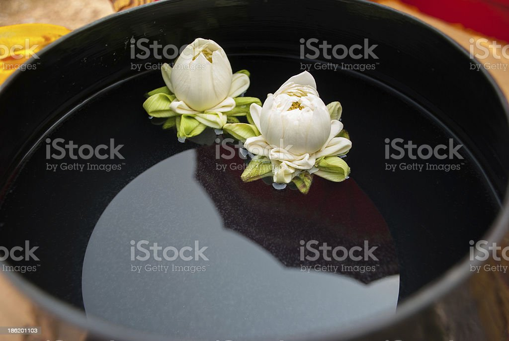 White lotus in monk's bowl royalty-free stock photo