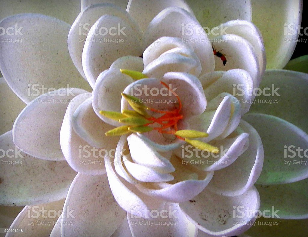 White lotus top view stock photo more pictures of 2015 istock white lotus top view royalty free stock photo izmirmasajfo