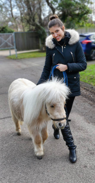 white maned palomino miniature shetland pony with russian outdoor girl - whiteway pony stock photos and pictures