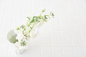 White matthiola flower