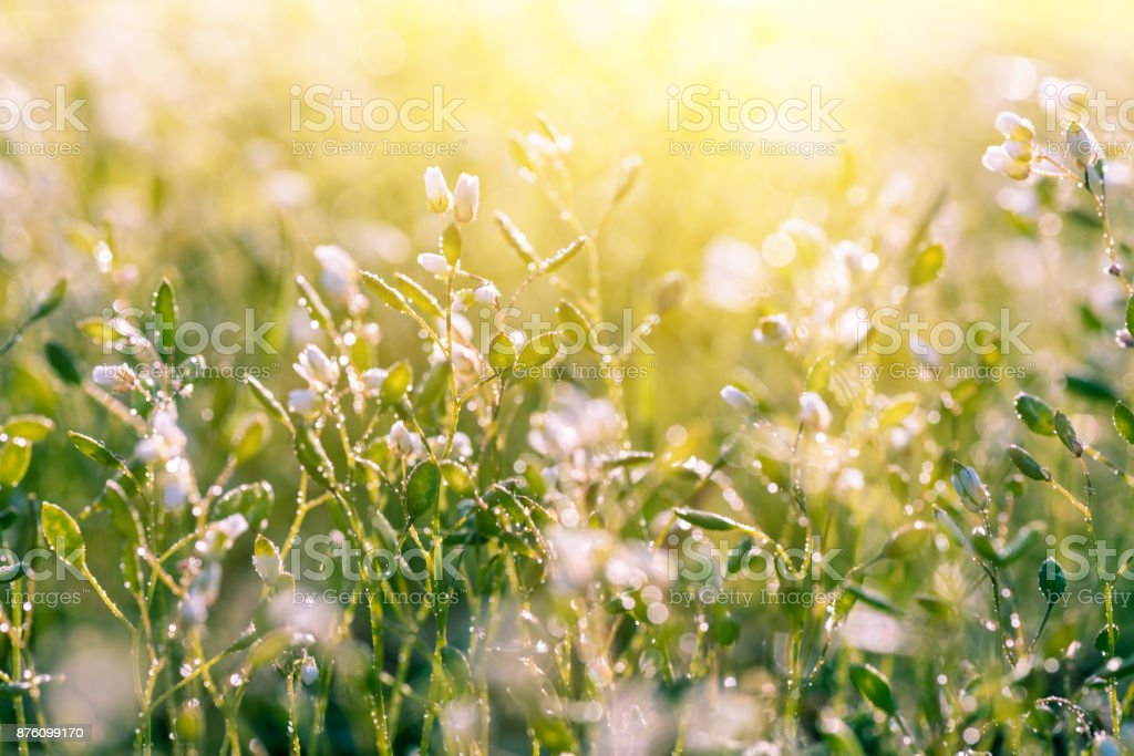 White meadow flowers nature sunny background stock photo istock white meadow flowers nature sunny background royalty free stock photo mightylinksfo