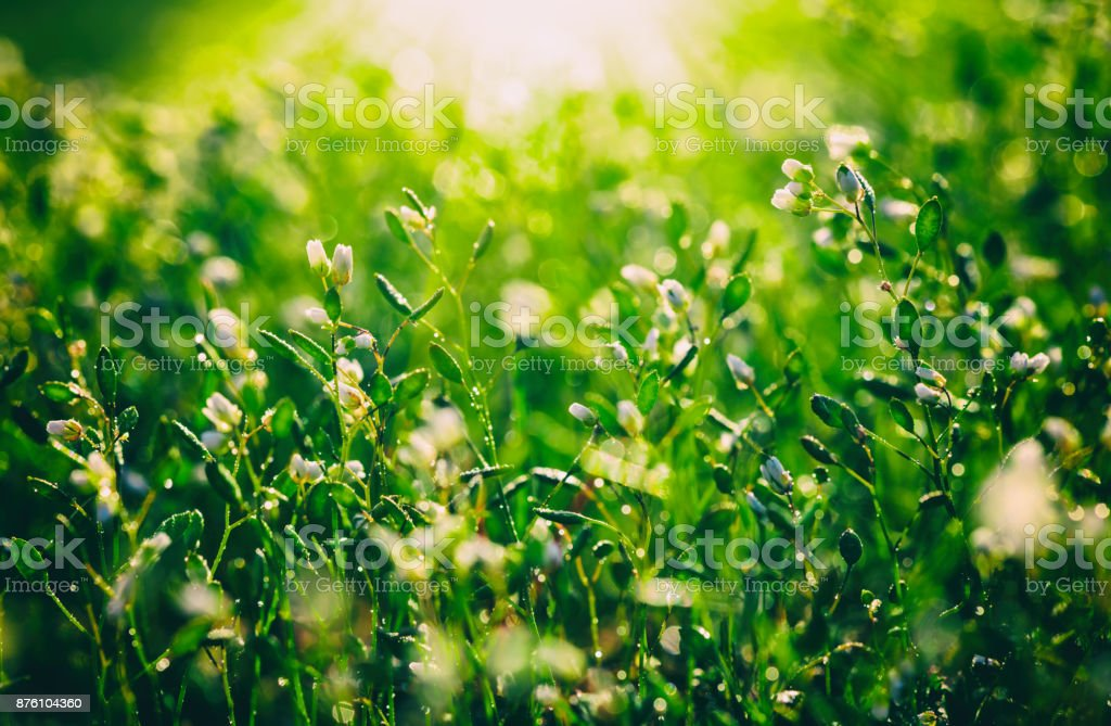 White meadow flowers nature sunny background stock photo more white meadow flowers nature sunny background royalty free stock photo mightylinksfo