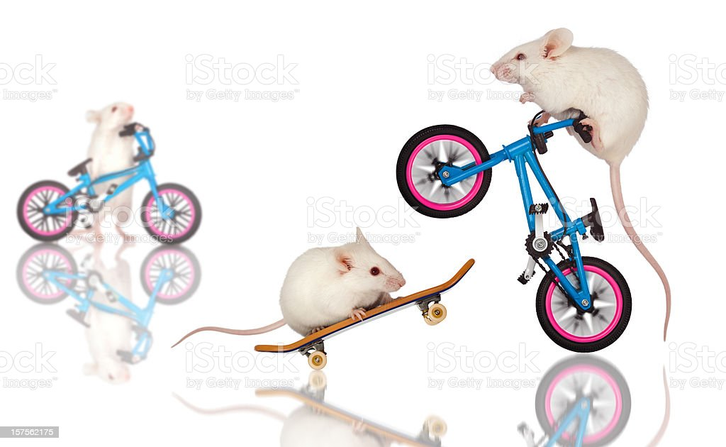 White Mice Daredevils Preform Stunts, Tricks on Bicycle, Skateboard stock photo