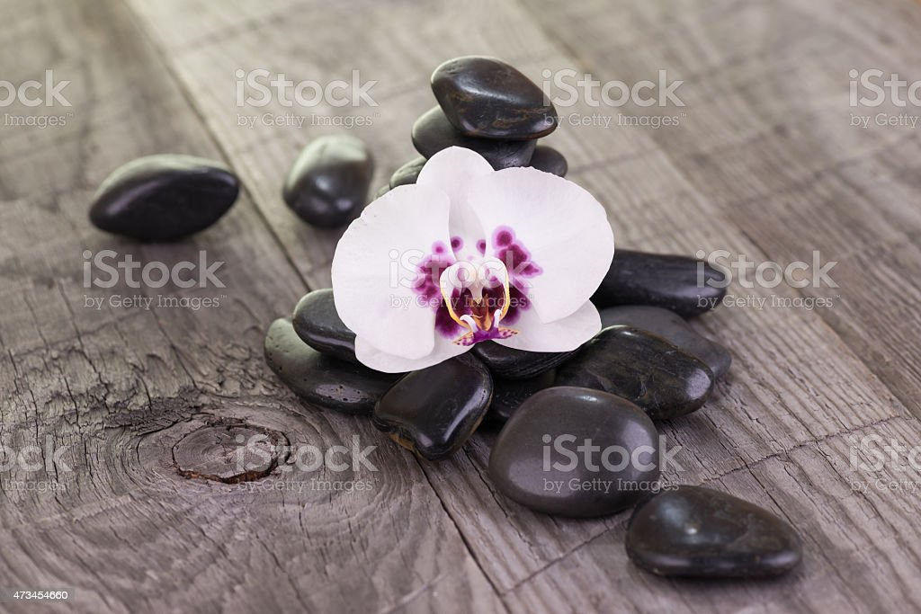 White Moth orchid and black stones on wooden background stock photo
