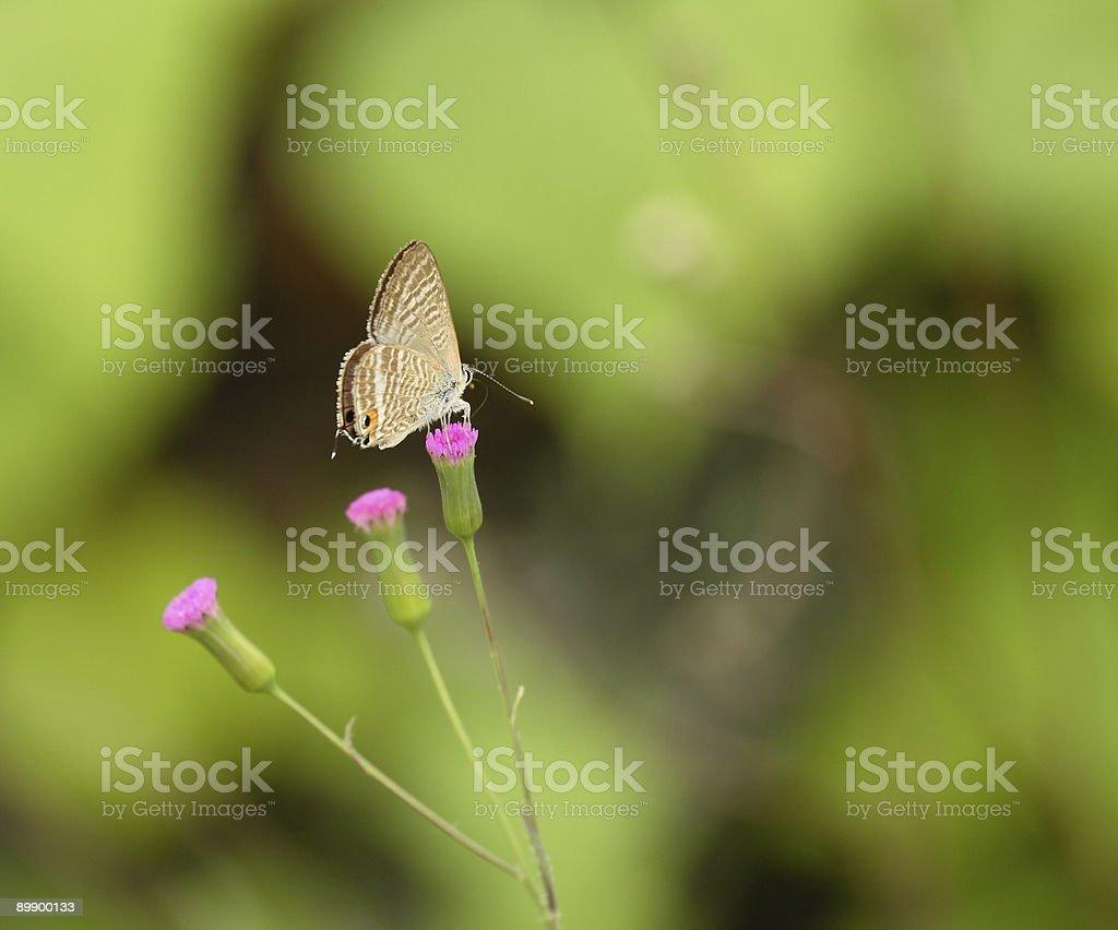 White Moth royalty-free stock photo