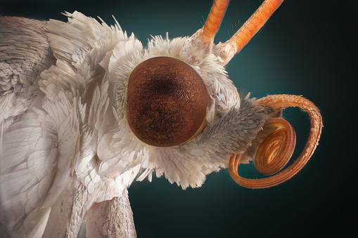 Extra sharp portrait of white moth through a microscope.