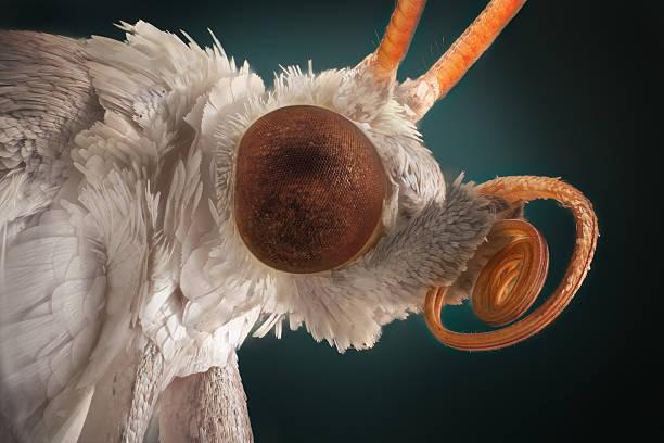 White moth portrait stock photo