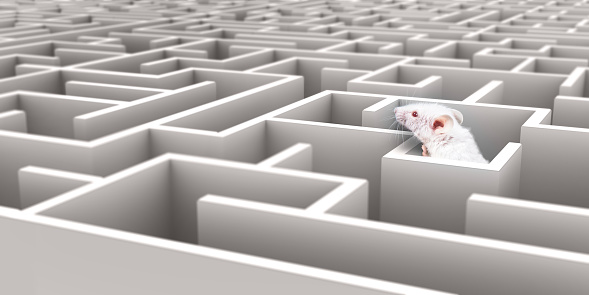 White Mouse In White Maze Looking Over Walls Stock Photo - Download Image Now