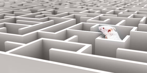 white mouse in white maze looking over walls - maze stock photos and pictures