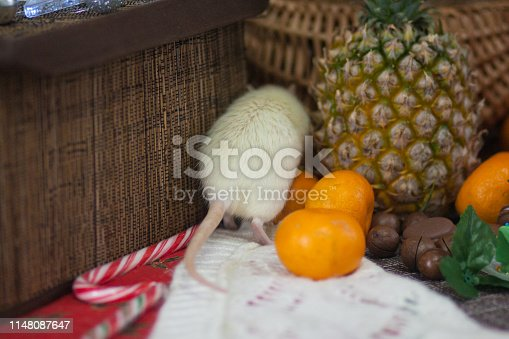 1206982378 istock photo White mouse on the table with fruit. The rat runs away. Mouse. 1148087647
