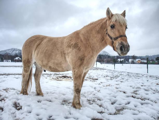weißeschlamm pony oder pferd stehen jetzt in - pferdespiele kostenlos spielen stock-fotos und bilder