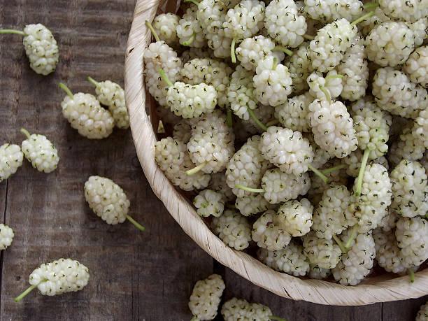 branco mulberry - amoreiras imagens e fotografias de stock