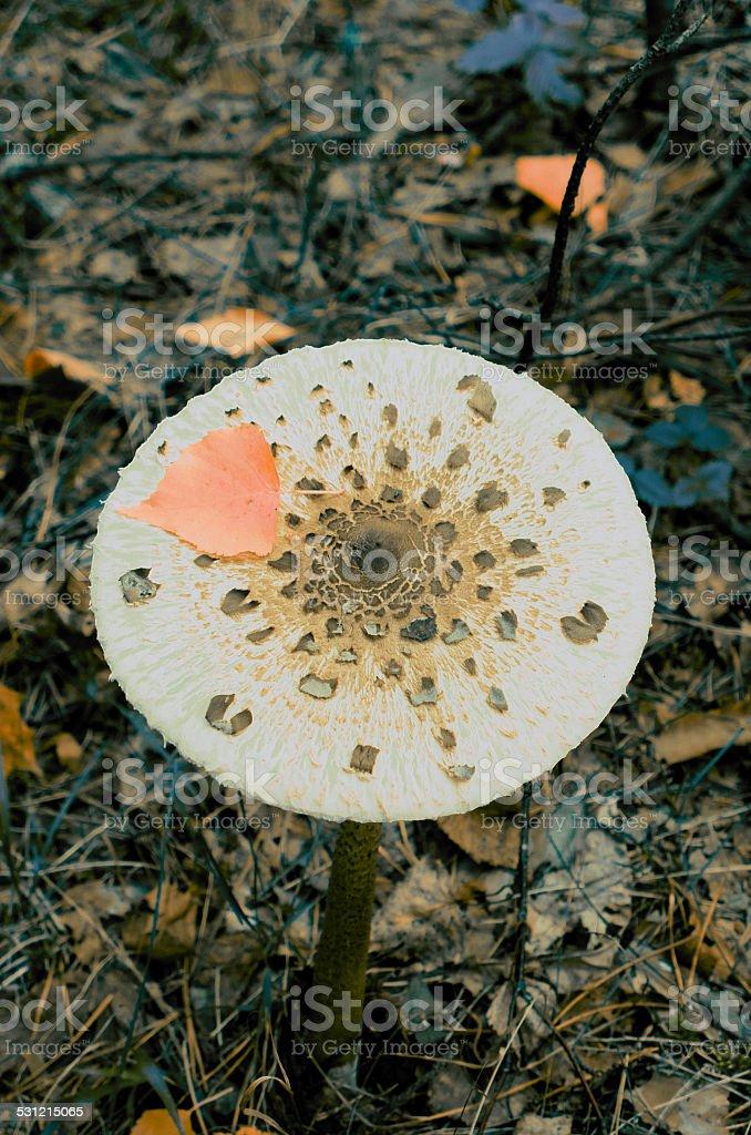 White mushroom and orange leaf stock photo