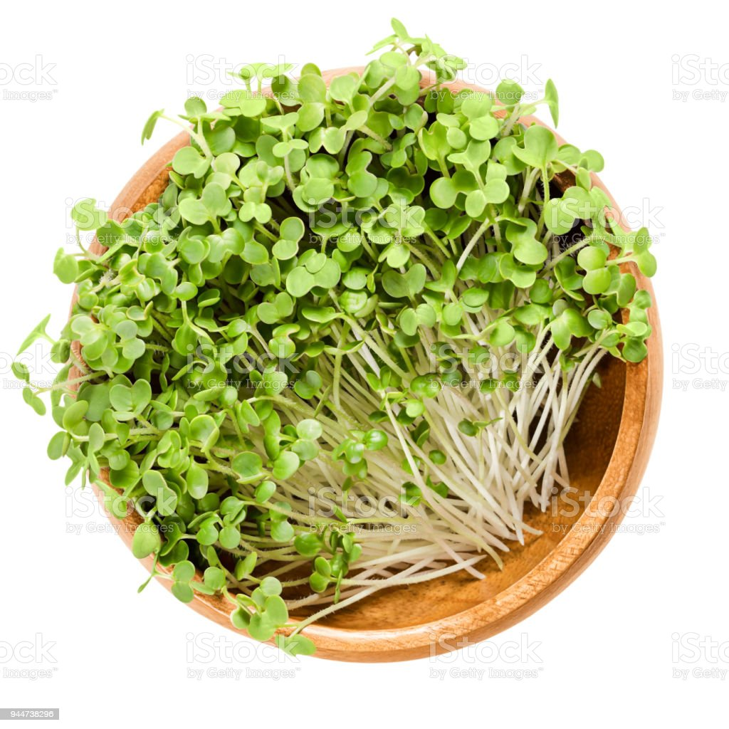White mustard microgreen in wooden bowl over white stock photo