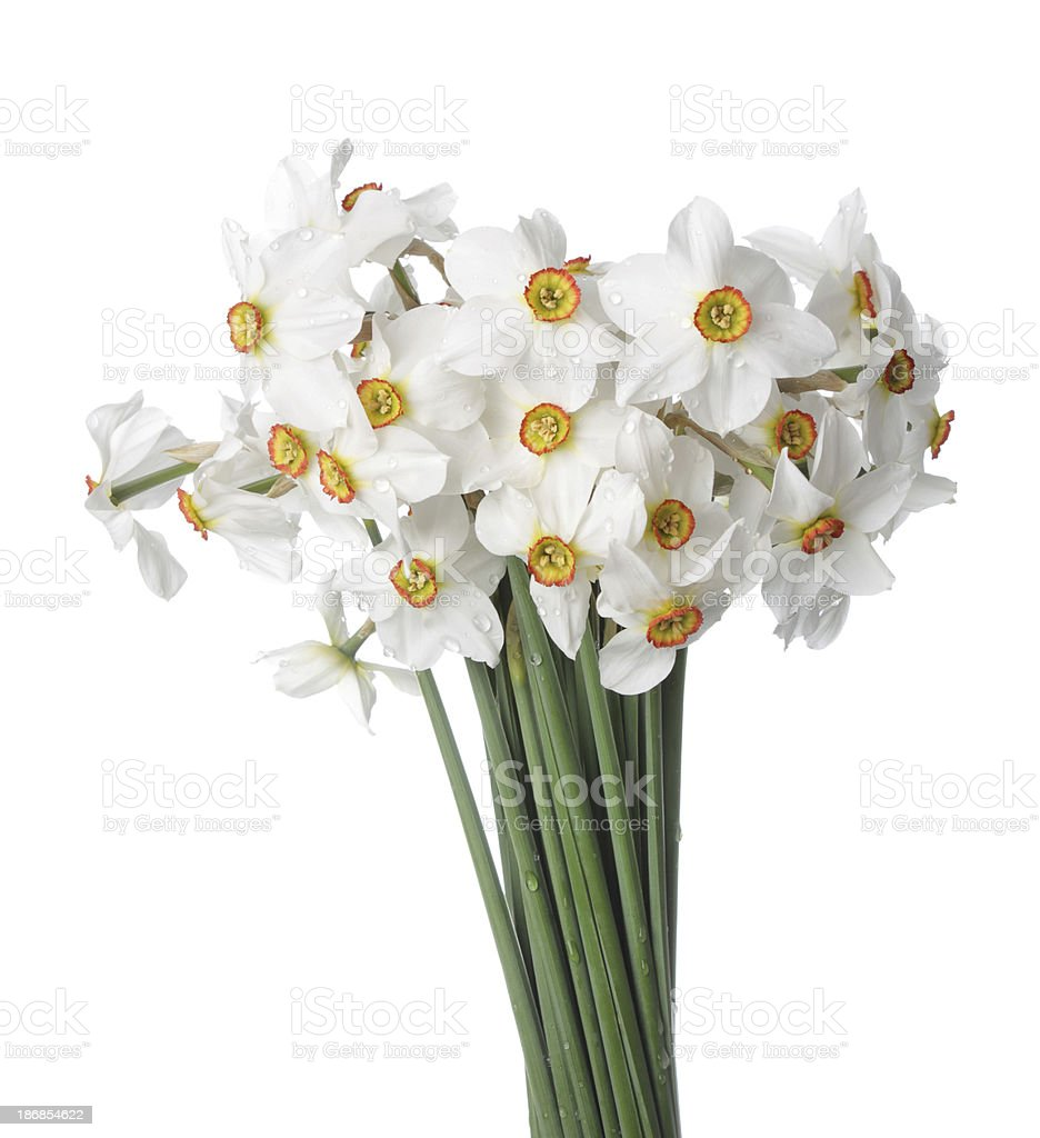 White narcissus bouquet isolated stock photo