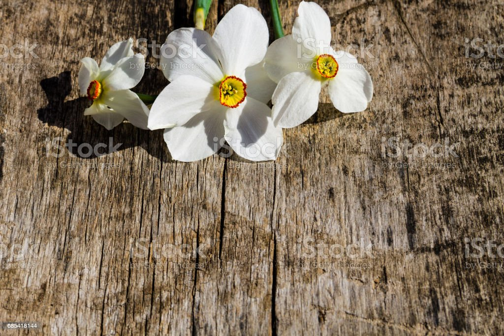 White narcissus flowers on rustic wooden background with copy space foto de stock royalty-free
