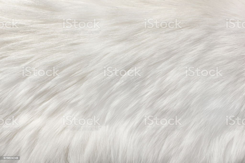 white natural fur background royalty-free stock photo