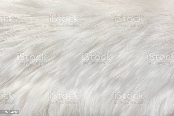 White natural fur background picture id975624248?b=1&k=6&m=975624248&s=612x612&h=dyzx8lk1s1wpg5hk l9w4 8b 8j76udrbkue0 vasua=